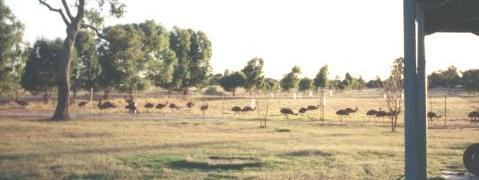 Picture of our Emu Farm in Western Australia.